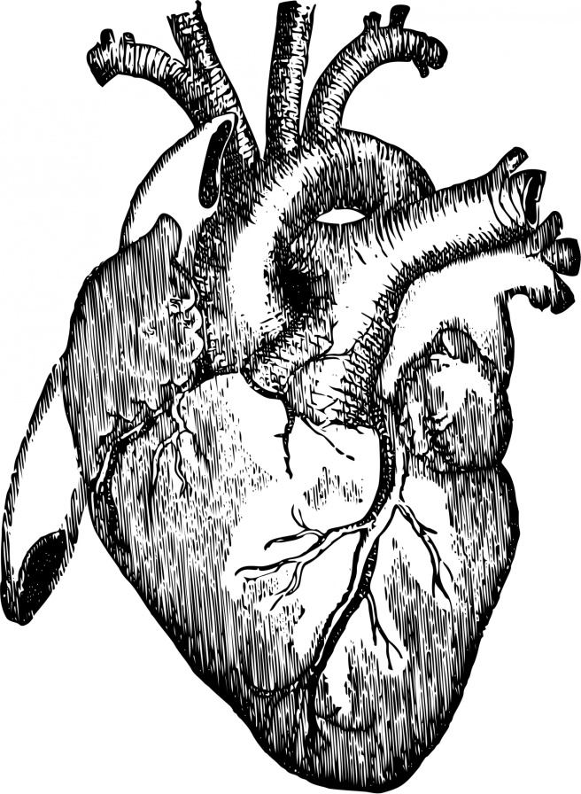 human-heart-14434474740W5
